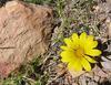 Цветок и камень...